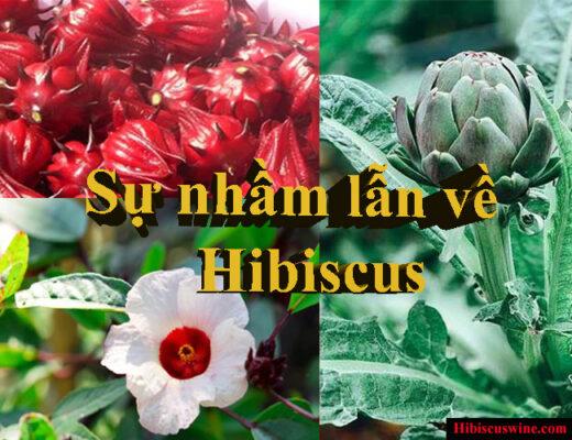 Sự nhầm lẫn về Hibiscus